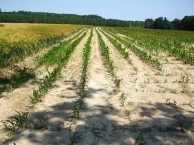Alerte sécheresse pour 3 tronçons de cours d'eau